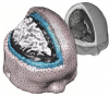 a complex human brain mesh generated by iso2mesh