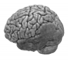 Injured brain normalized with clinical toolbox